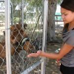 Boba, camel farm 029