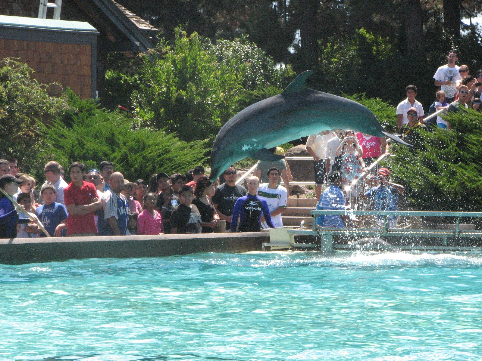 Sea world dolphins jumping