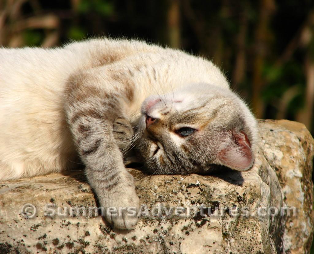 cat in spain