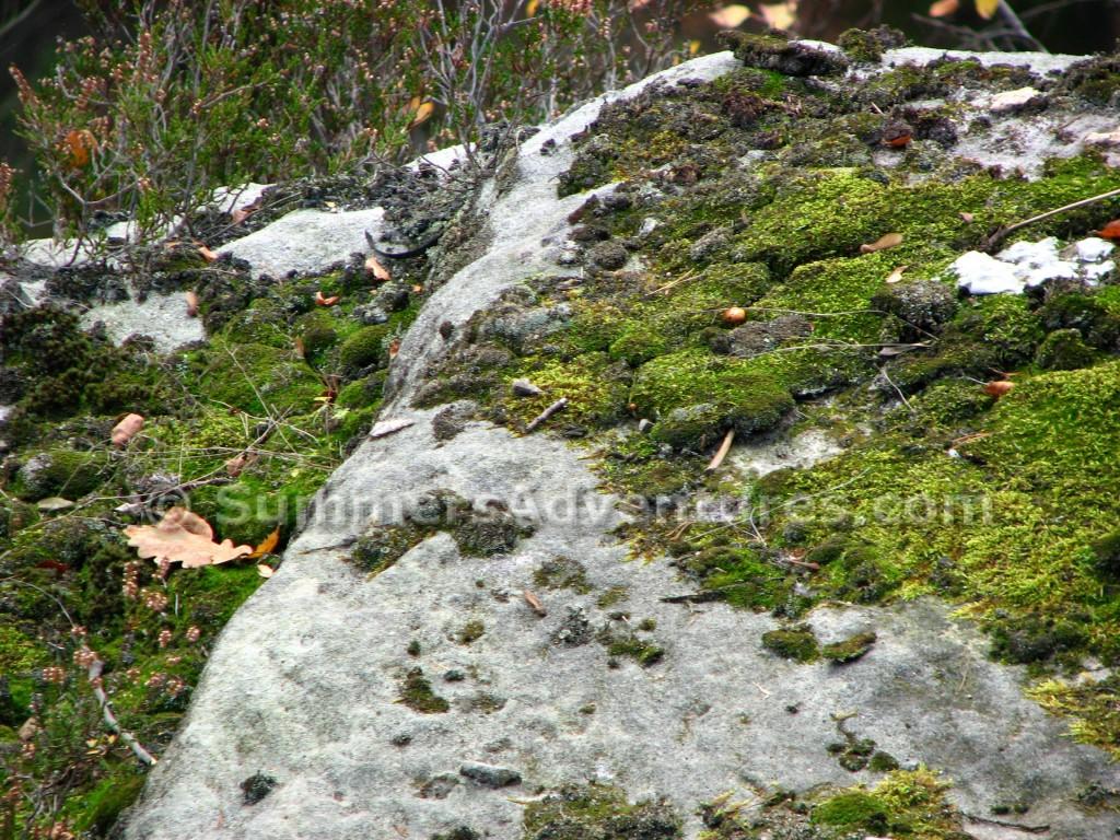 Moss on Rocks